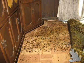 mold on floor